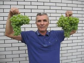 Виноград Вива-Айка
